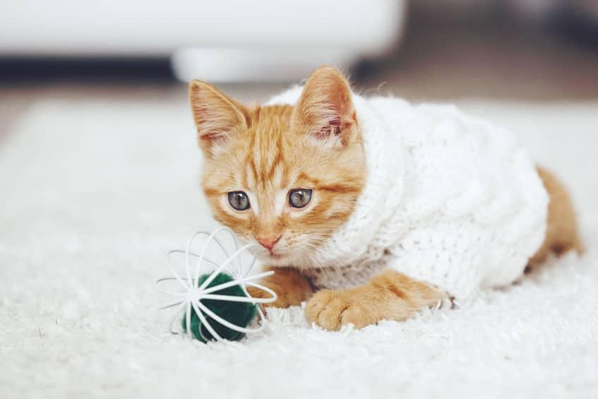giochi-per-gatto-pallina-xcyp1
