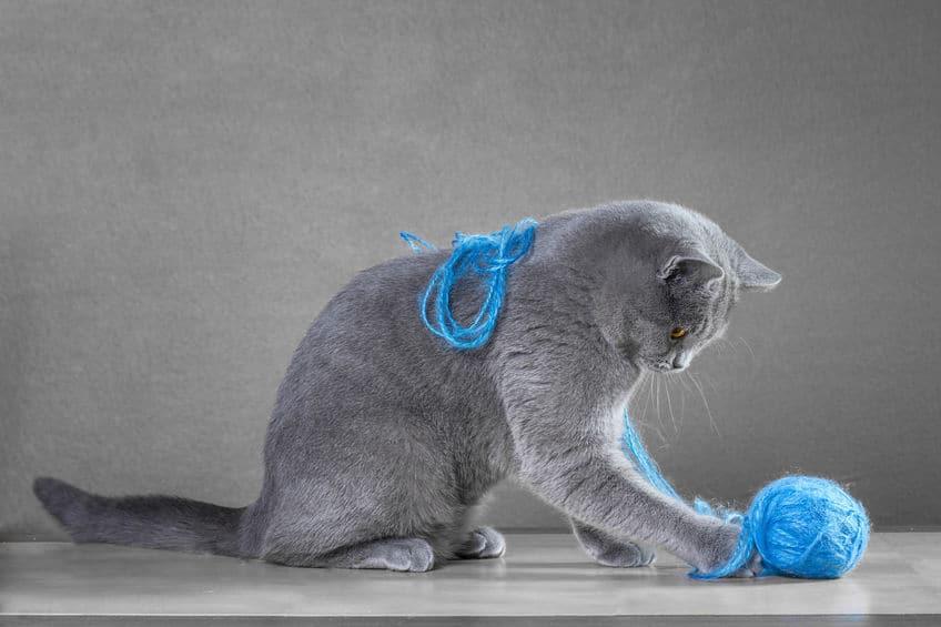 giochi-per-gatto-gomitolo-xcyp1