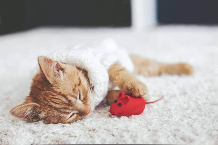 giochi-per-gatto-topino-xcyp1