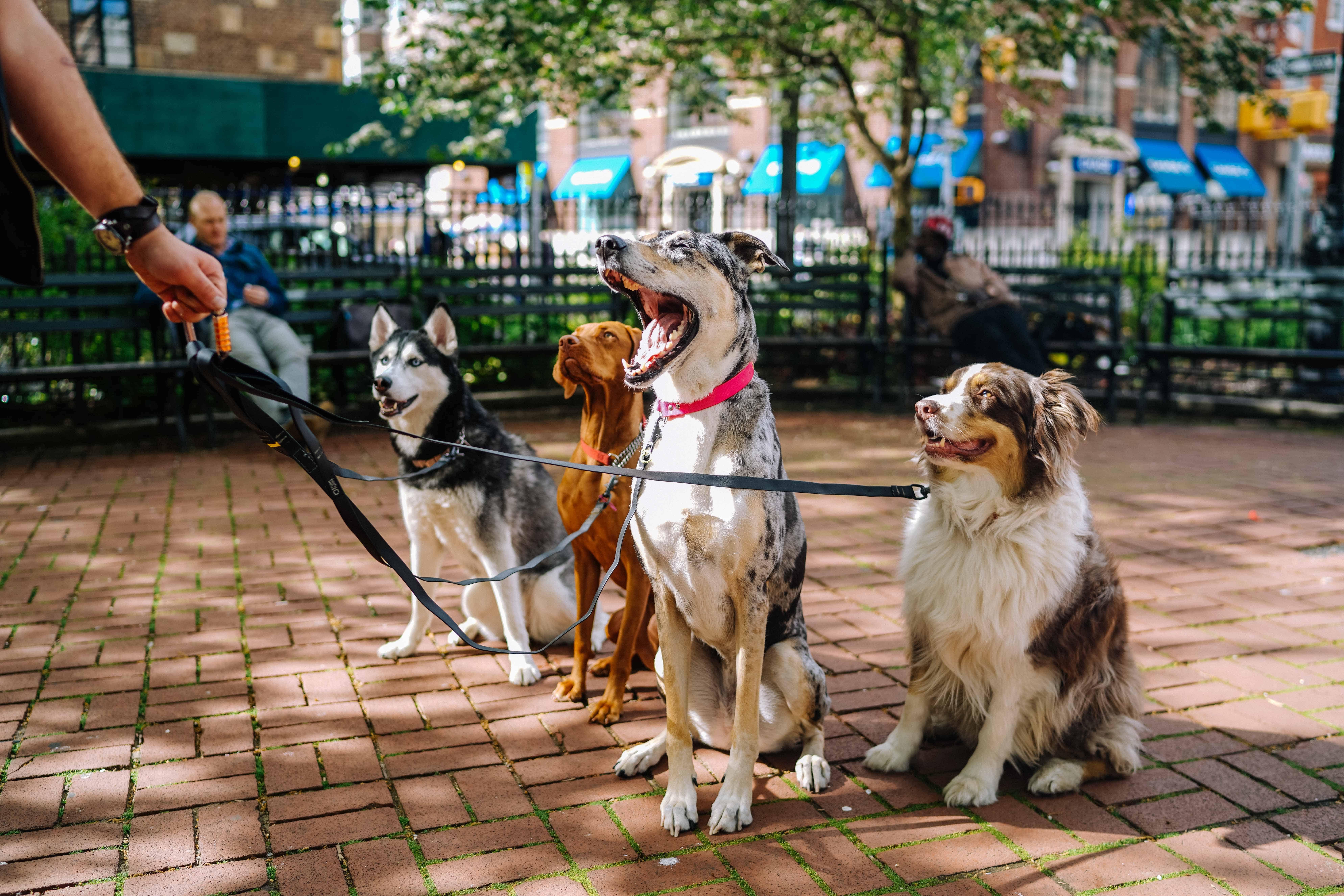 Gruppo di cani al guinzaglio