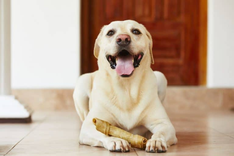 osso-per-cani-prima-xcyp1