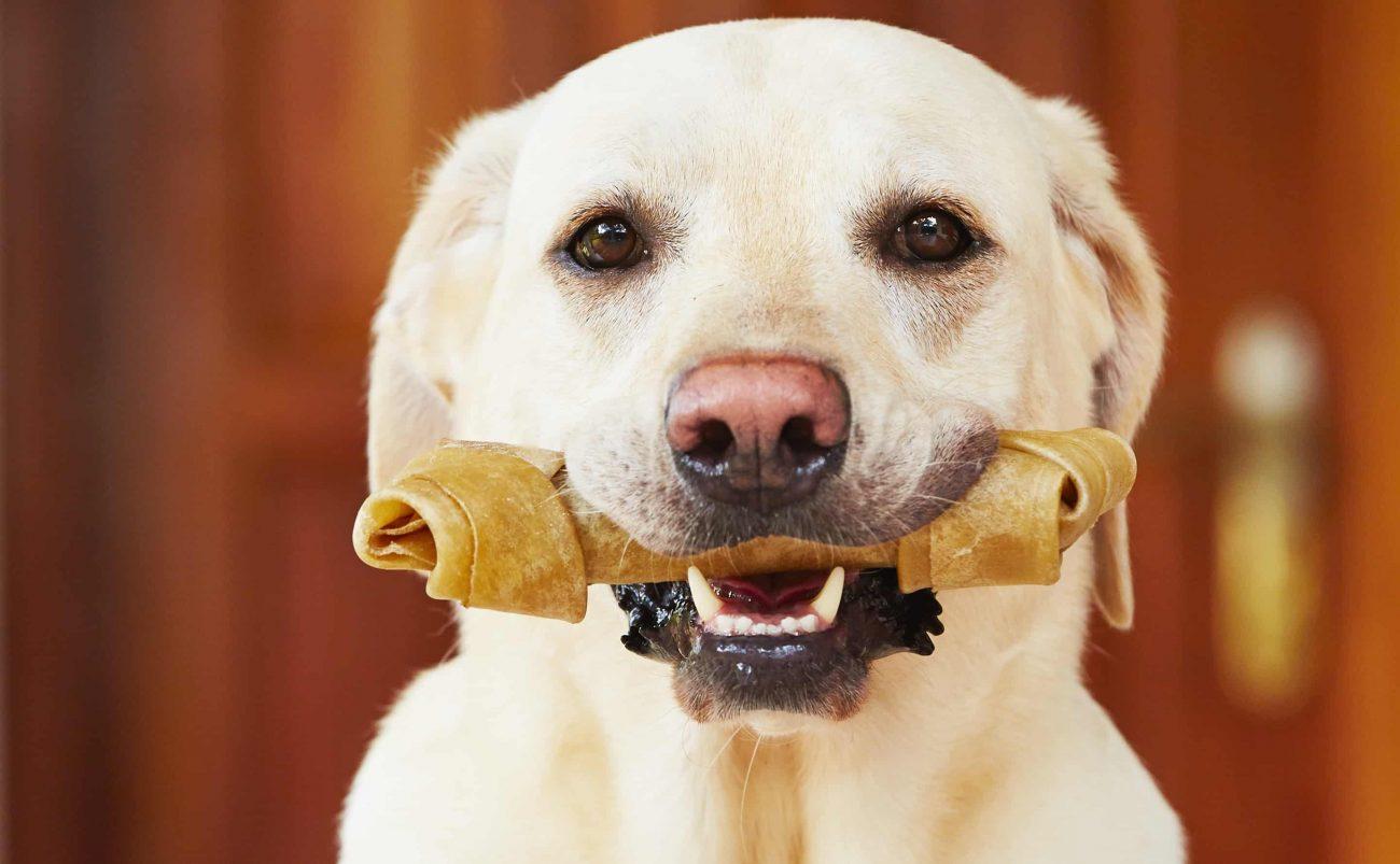 Miglior osso per cani 2020: Guida all'acquisto