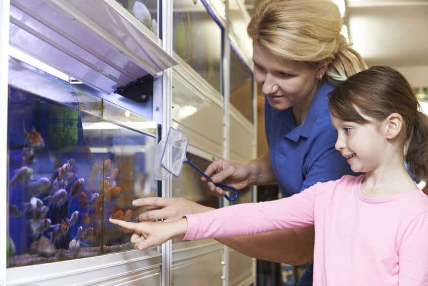 aquarium-for-fish-before-xcyp1