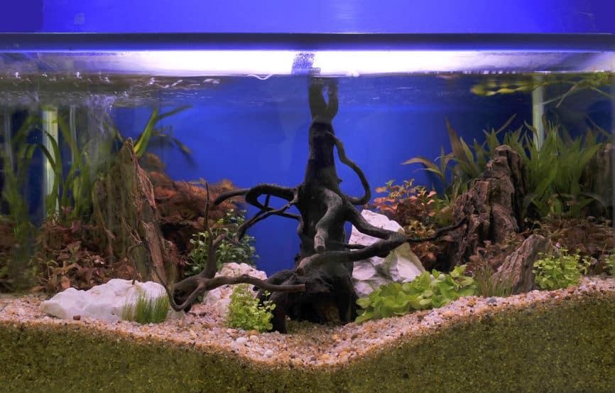 aquarium-for-fish-product-xcyp1