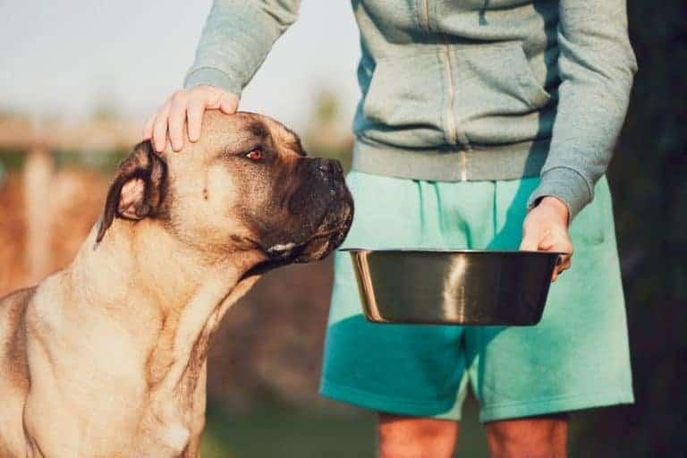 cibo-ipoallergenico-per-cani-xcyp1