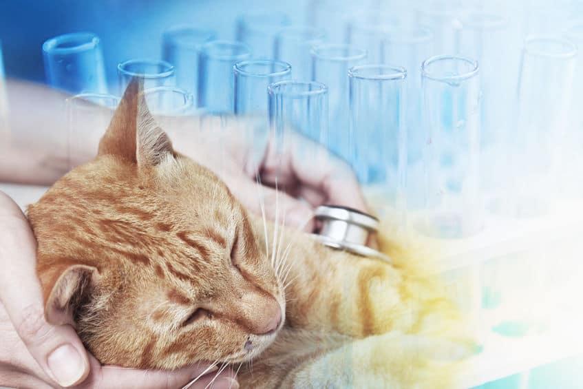 pipette-antiparassitarie-per-gatti-veterinario-xcyp1