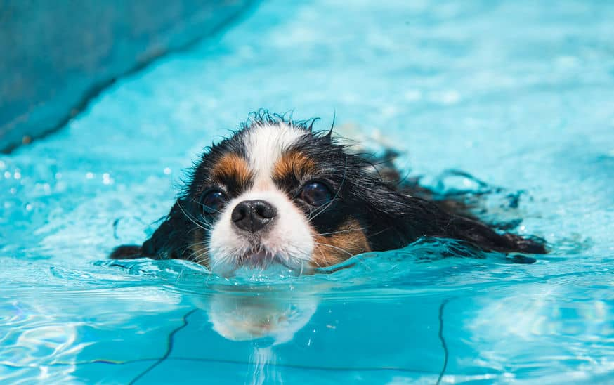 Swimming-for-dogs-especially-xcyp1