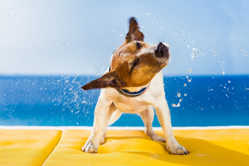 Swimming-for-dogs-fourth-xcyp1