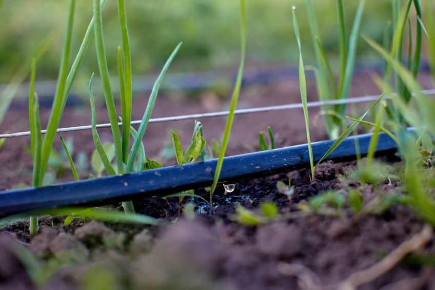 impianto-di-irrigazione-a-goccia-prima-xcyp1