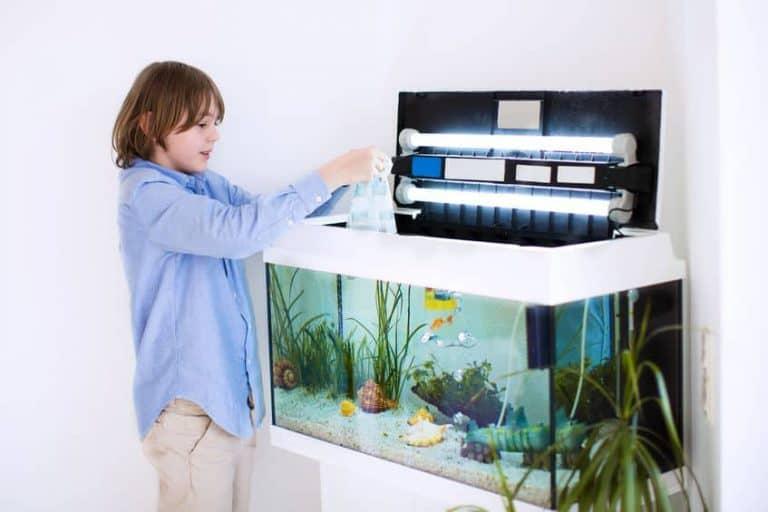 bambino che si occupa di un acquario