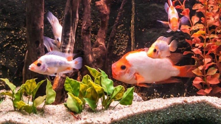 Acquario con pesci in primo piano