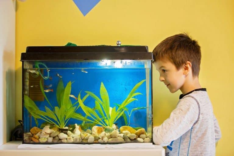 Bimbo che guarda un acquario