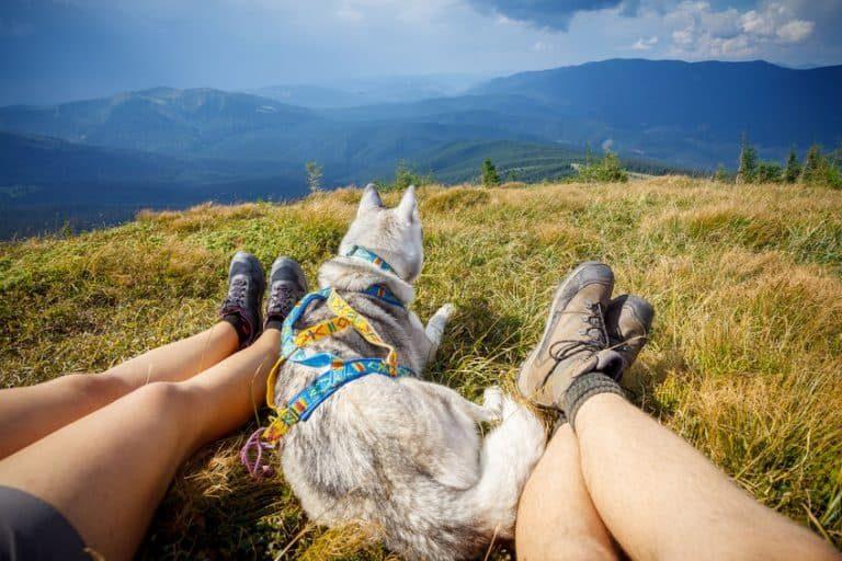 Due escursionisti con cane