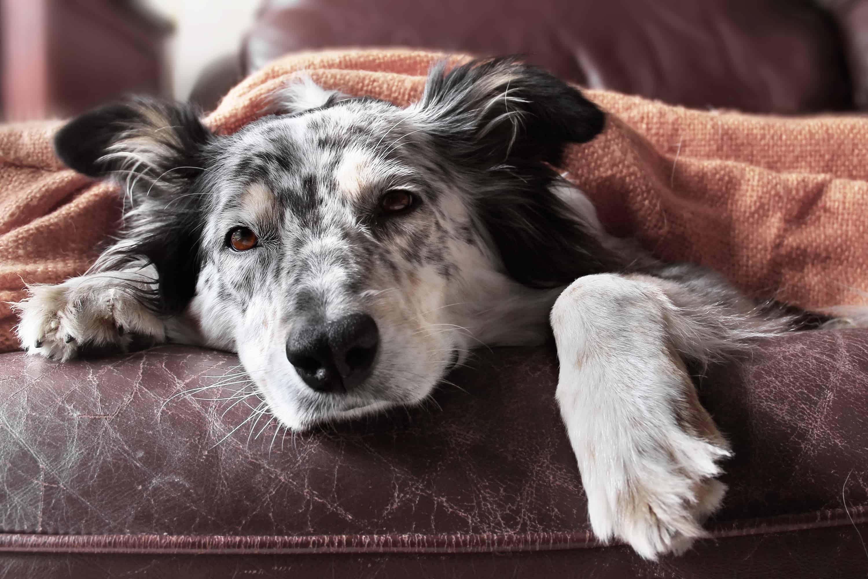 carrello-per-cani-disabili-xcyp1