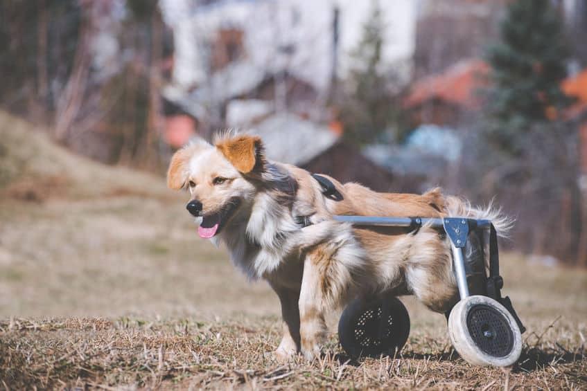 carrello-per-cani-disabili-prodotto-xcyp1