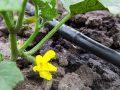 Miglior impianto di irrigazione a goccia 2020: Guida all'acquisto