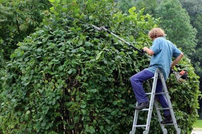 Uomo che usa un tagliasiepi su un albero