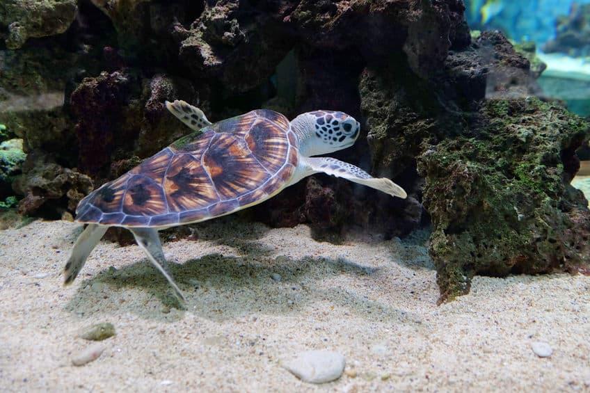 vasca-per-tartarughe-acqua-xcyp1