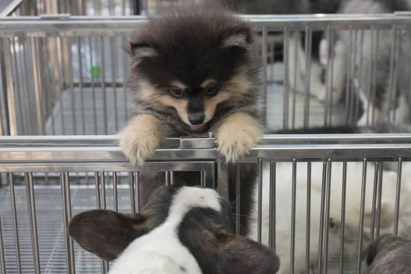recinto-per-cani-prima-xcyp1
