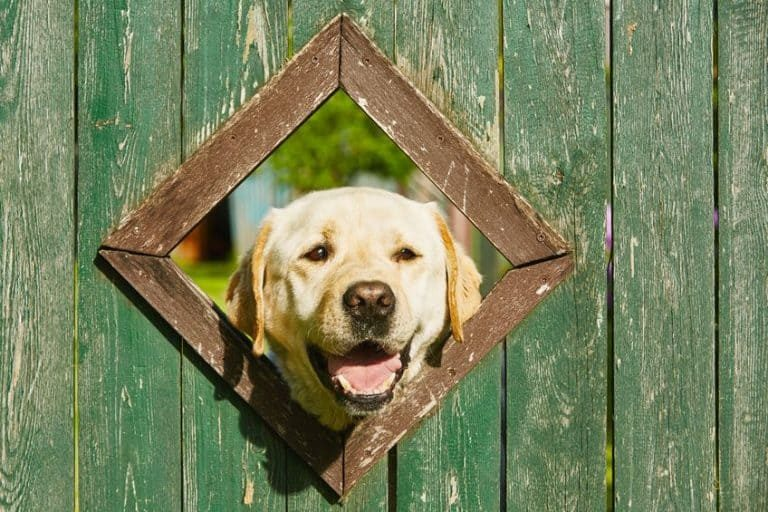 Dog with his head coming out of the fence