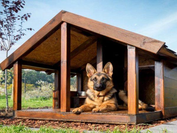 Casetta per cani da esterno