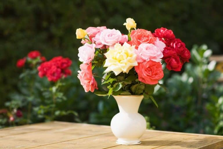 Vaso con rose colorate