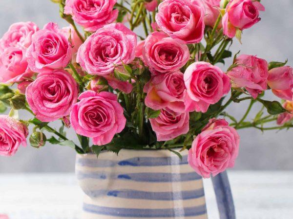 Vaso pieno di rose