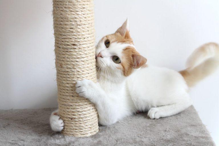 Gatto che gioca al tiragraffi