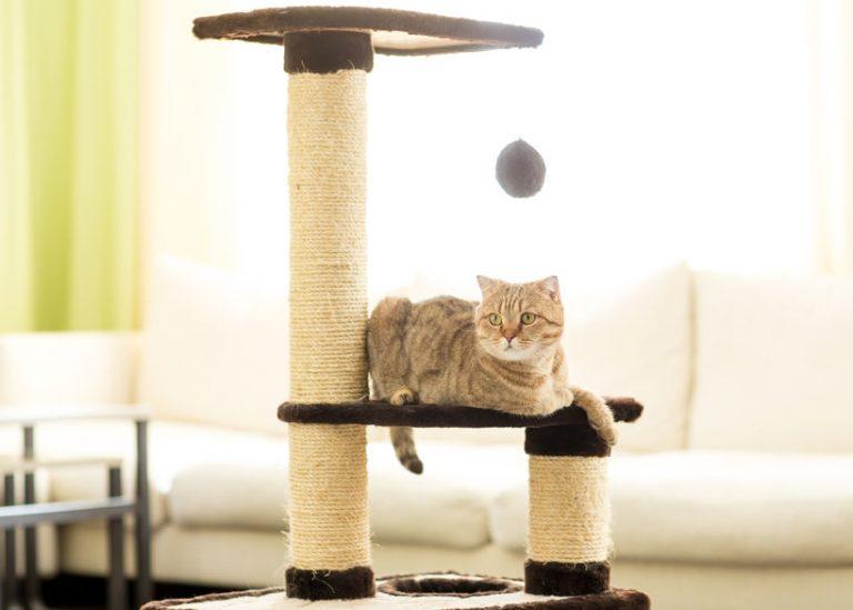 Gatto che riposa sul tiragraffi ad albero
