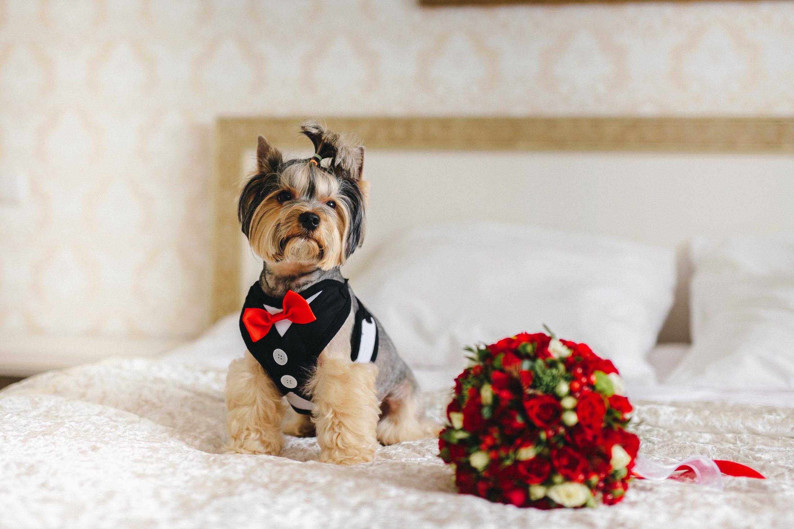 Miglior vestito per cani 2020: Guida all'acquisto
