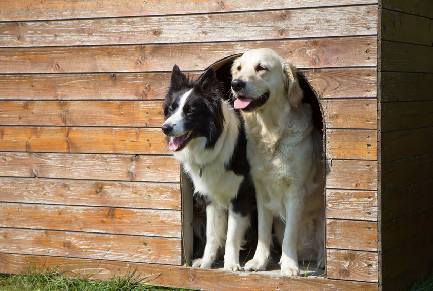 due cani in una casa