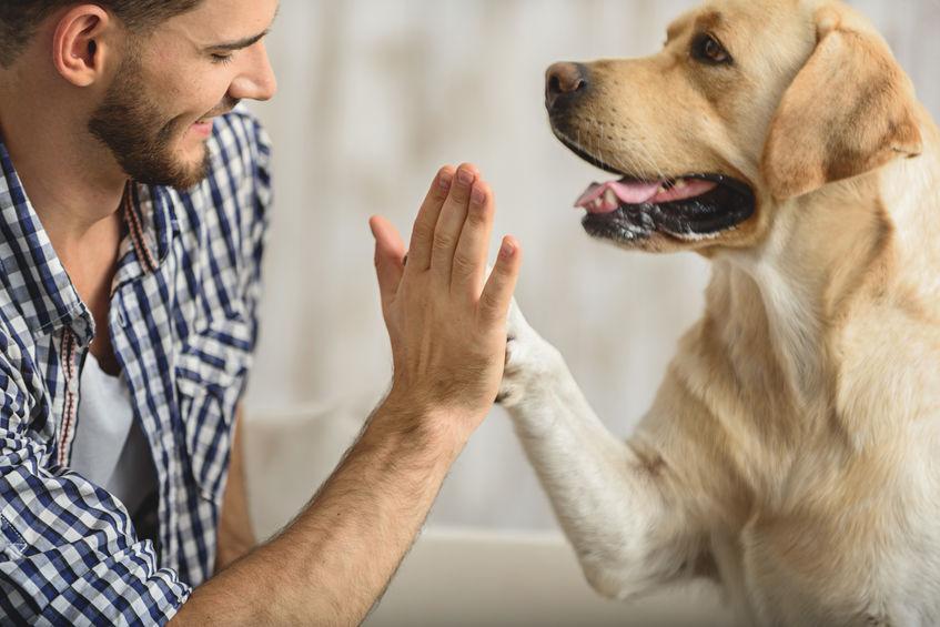 un cane che gioca con il suo proprietario