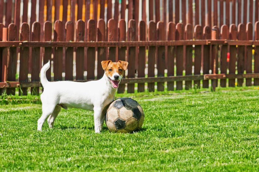 un cane che gioca con la palla sull'erba