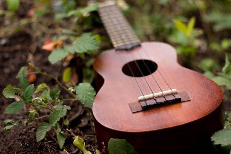 Un ukulele nell'erba
