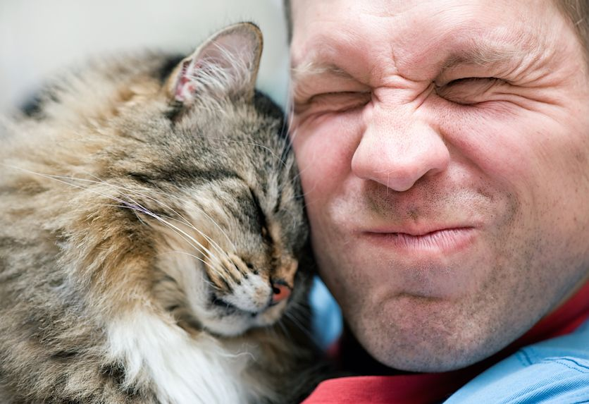 Pettine per gatti