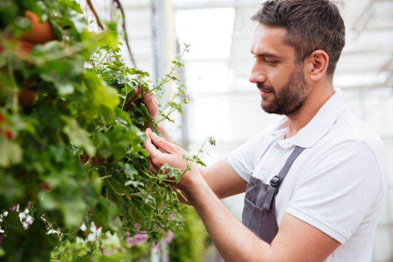 Uomo che fa manutenzione al giardino