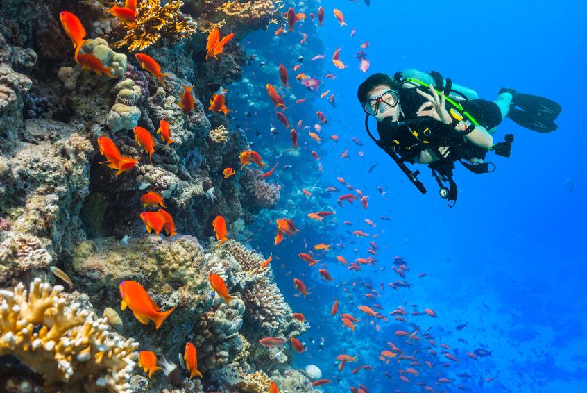 Immersione in mezzo ai pesci