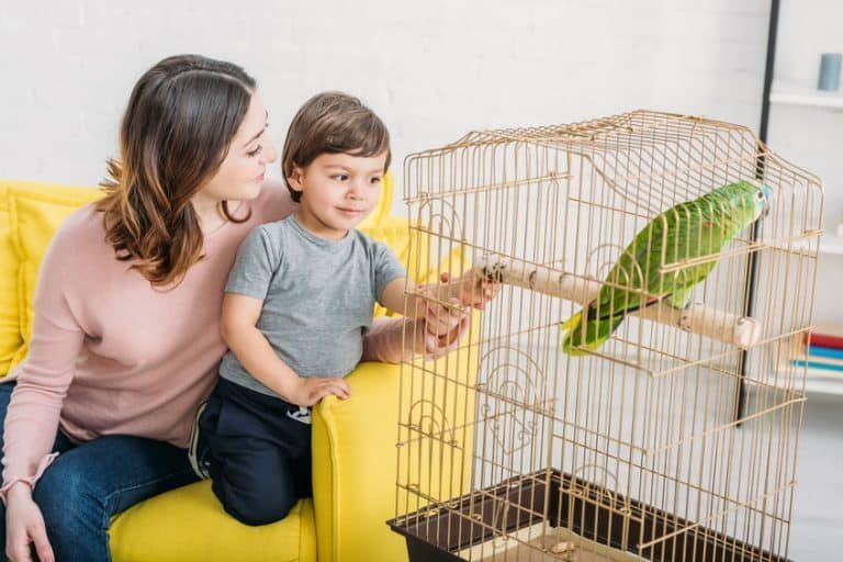 Mamma che mostra un pappagallo al figlio
