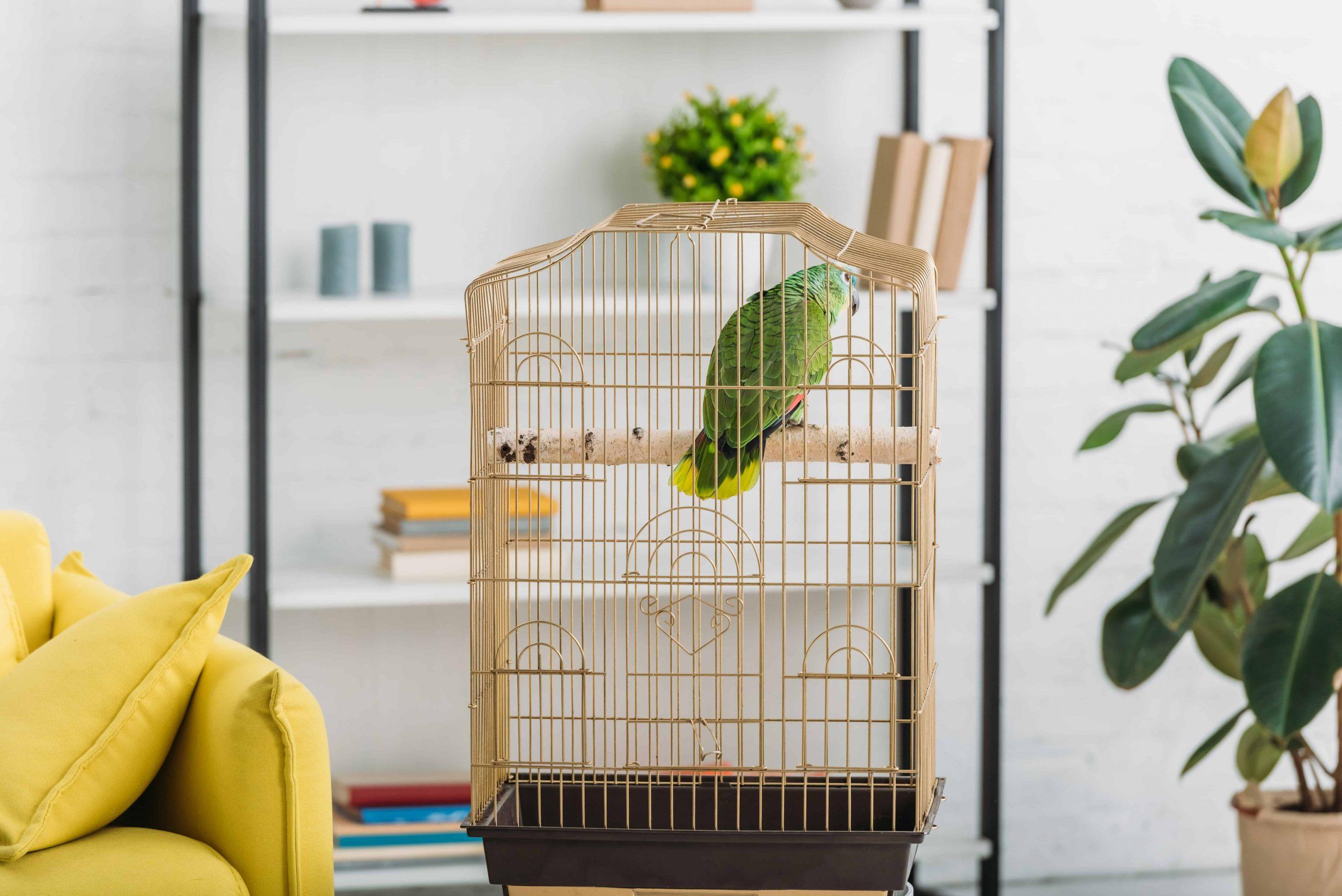 Gabbia per pappagalli