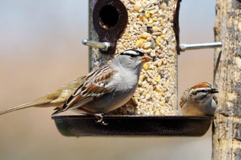 Un pájaro en un comedero al aire libre