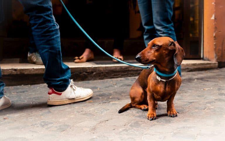 Un perro con correa