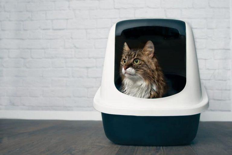 Gato dentro de un arenero