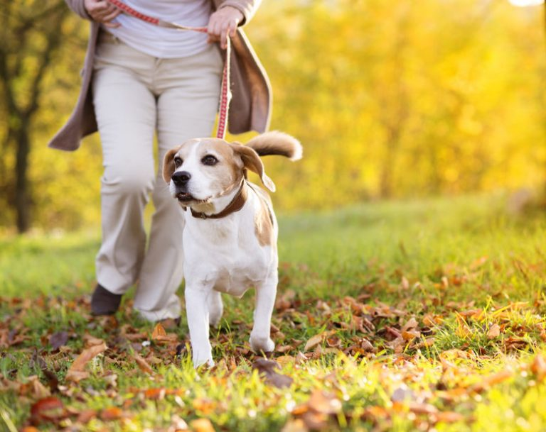 mujer con perrito beagle