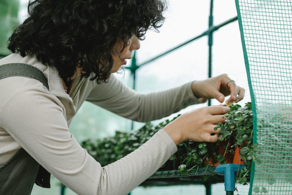 Mujer cosechando de huerto