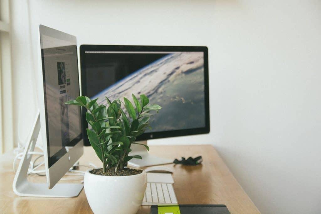 Dois monitores de computador, um vaso com planta e um teclado.